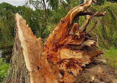 Omgevallen bomen in het buitengebied