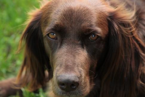 Tinus de hond